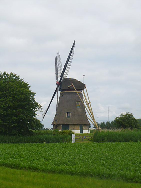 Zuidhollandse Molen, Hank, De molen in overhekse stand.  Foto: Tony Hop (10-7-2013).