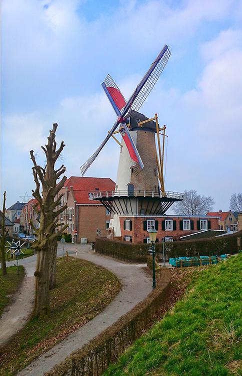 D'Orangemolen, Willemstad, Omdat de bomen op het zuiden grondig zijn gesnoeid, is een foto vanuit deze hoek weer mogelijk.  Foto: Marijn Kaufman (19-2-2015).