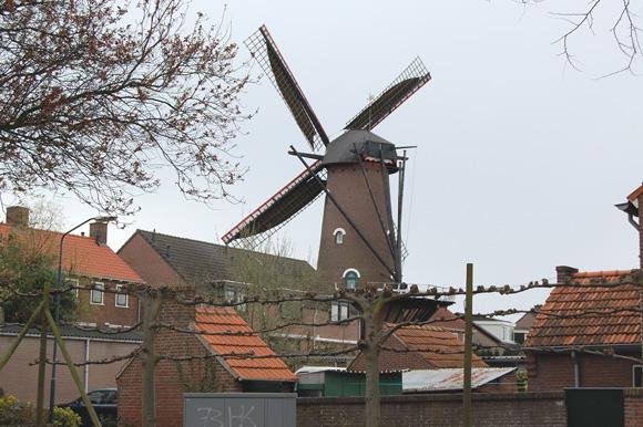 Fleur, Zevenbergen, Foto: Rob Pols (30-3-2008).