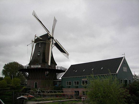 Molen van Sloten, Amsterdam-Sloten, Hier staat-ie voor het eerst met gerepareerde roeden, Oudhollands  wiekentuig en Amstellandse kleuren. Ofwel: geheel anders dan-ie  daarvoor was. Foto: Rein Arler (mei 2010).