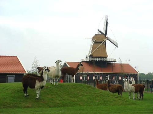 Molen van Piet, Tuitjenhorn, Foto: Eric Zwijnenberg (2007).