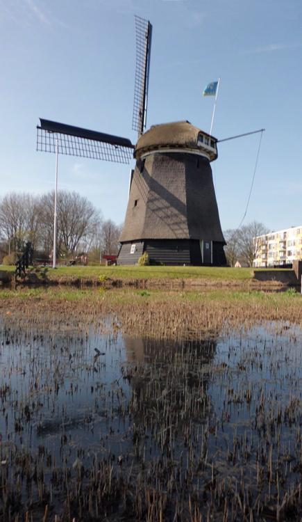 Geestmolen, Alkmaar, Foto: Julius Meijer (26-3-2012).