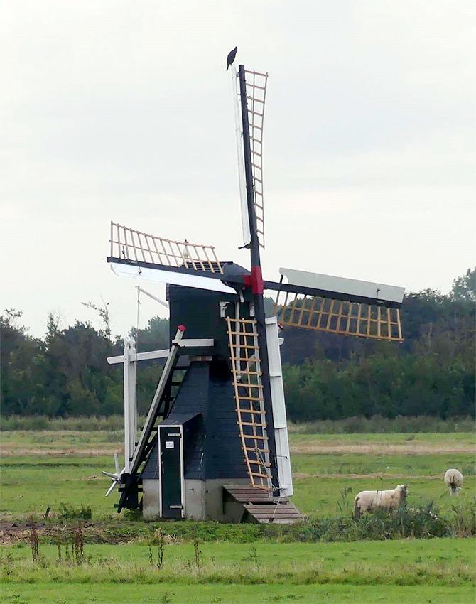 De Kemphaan, De Waal (Texel), Foto: Harmannus Noot (8-9-2008).