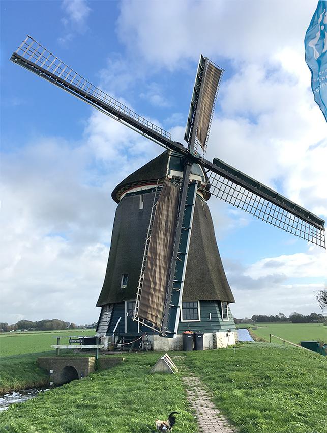 Berkmeermolen, Obdam, Foto: Piet Glasbergen (9-9-2015)