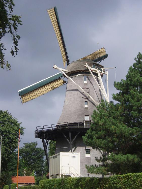 De Zandhaas, Santpoort, Foto: Jeroen van Dijke (Juni 2010).