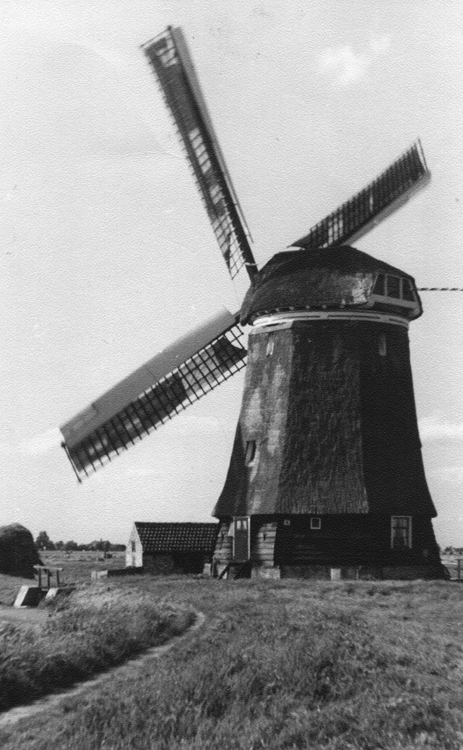 Nieuw Leven, Wogmeer, De molen in 1950. Foto ingezonden door Arie Hoek.