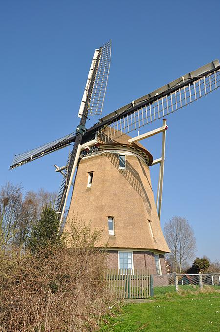 De 1100 Roe , Amsterdam-Slotermeer, De molen heeft pas nieuw riet gekregen.  Foto: Donald Vandenbulcke (22-3-2012).