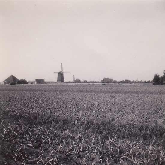 Poldermolen Waarland, Waarland, Foto omstreeks 1950, coll. Fred Overvliet.