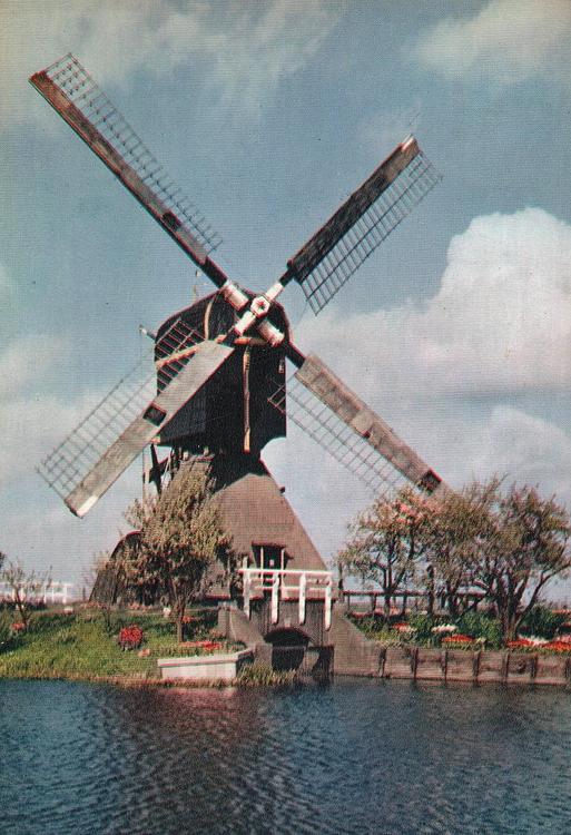 Oukoper Molen, Nieuwersluis, De Oukoper wipmolen nog met het Dekkersysteem.  Foto: n.n. (1955), coll. Arie Hoek.