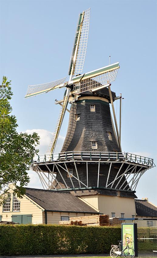 d'Heesterboom, Leiden, Foto: René Speur (12-2-2008)