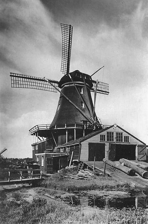 De Herder, Leiden, Op de achtergrond de wipmolen van de Polder Maredijk.  Foto n.n., datum onbekend (coll. Rob Pols).