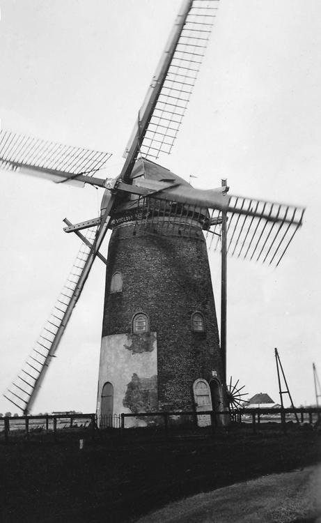 De Swaen (v/h Windlust), Nieuw-Beijerland, De malende molen met de naam Windlust op de baard in 1955.  Foto: Karl Föllmi sr. (ingezonden door Henk van den Heuvel).