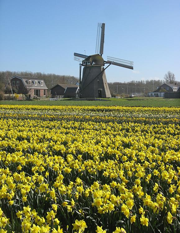 Hogeveensemolen, Noordwijkerhout, Foto: Piet Glasbergen (19-4-2013).
