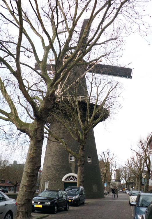 De Walvisch, Schiedam, Foto: Julius Meijer (14-1-2012).