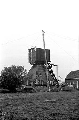 Groote Molen, Zoeterwoude-Rijndijk, De wederopbouw na de zware storm van april 1973.  Foto: Frans Rutten (1975).