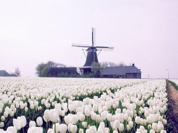 De Hoop, Holwerd, Joop Vendrig (25-4-2002)   Database Nederlandse molens