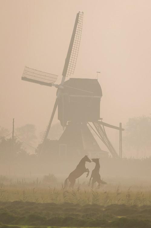 Voorste Molen / Hooglandse Molen, Hellouw, Bart Hardoff (23-8-2013).   Database Nederlandse molens