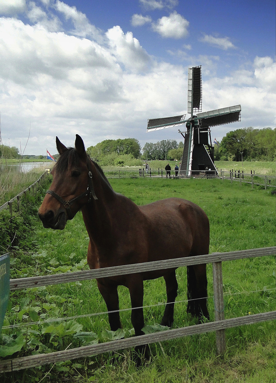 Follega Molen, Laag-Keppel, Christina Zoet (13-5-2012) | Database Nederlandse molens
