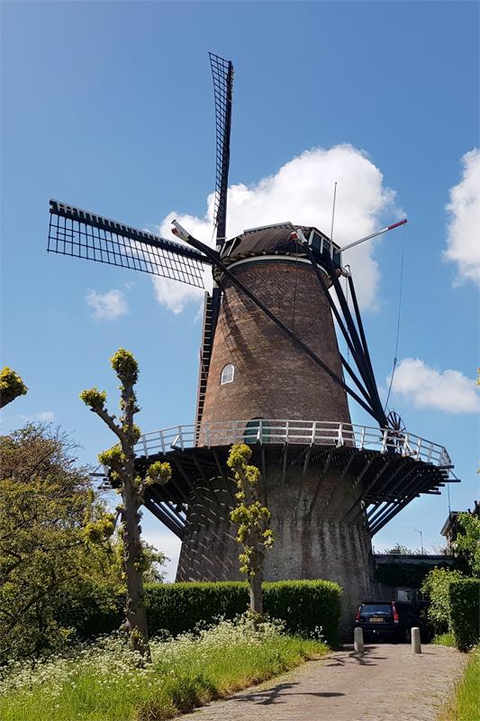 De Koornbloem, Goes, Pieter Zuijkerbuijk (4-5-2019) | Database Nederlandse molens