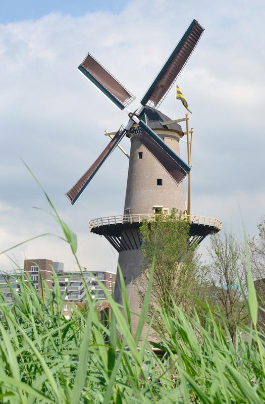 De Palmboom, Schiedam, Rob Pols (3-6-2018) | Database Nederlandse molens